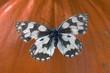 motyl w fotografii makro