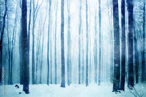 Fotobehang Bossen Lovely heavy snowy day in the foggy beech forest landscape. Winter season foggy beech forest scene.