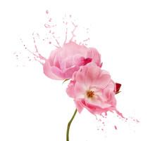 Pink Flower Splashes