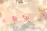 Orchid flower in sofe style for background - 96283723