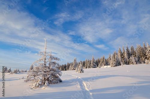 Keuken foto achterwand Bossen Winter landscape with footpath