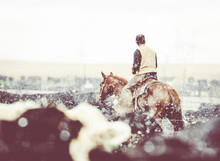 Feedlot Cowboy On Horse Working In The Snow