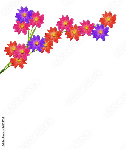 Photo Stands Floral woman Dahlia flower isolated on white background