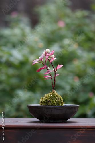 Fotobehang Bonsai 苔盆栽