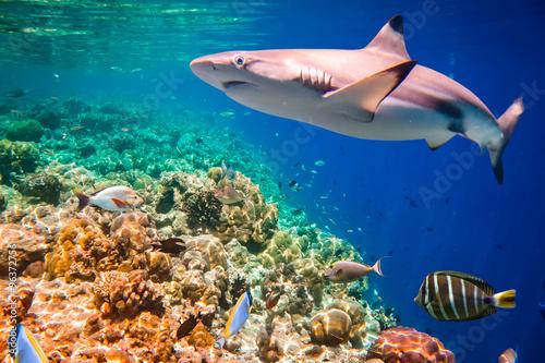 Tropical Coral Reef.