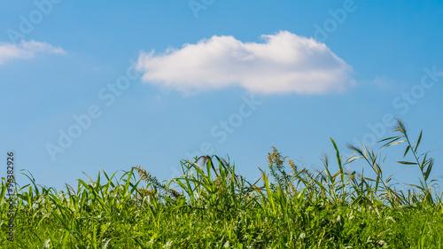 Valokuva  土手と白い雲
