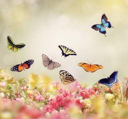 Fototapeta Motyle Flowers and Butterflies