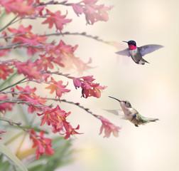 FototapetaHummingbirds and Red Flowers