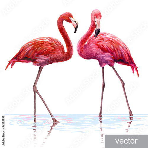 Fotografia  Colorful pink flamingo