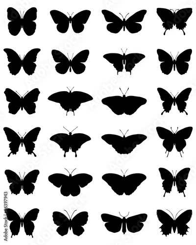 Fototapeta  Black silhouettes of butterflies on a white background, vector
