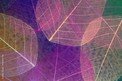 Autocollant pour porte Squelette décoratif de lame Abstract skeleton leaves background