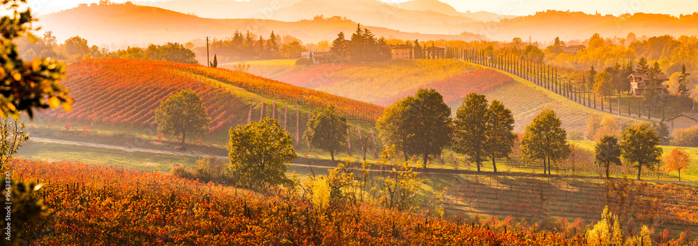 Fototapety, obrazy: Castelvetro di Modena, vineyards in Autumn, italy