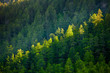 Beautiful landscape of highlands of Altai mountains