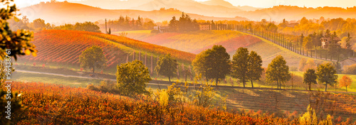 Canvas Prints Orange Glow Castelvetro di Modena, vineyards in Autumn, italy