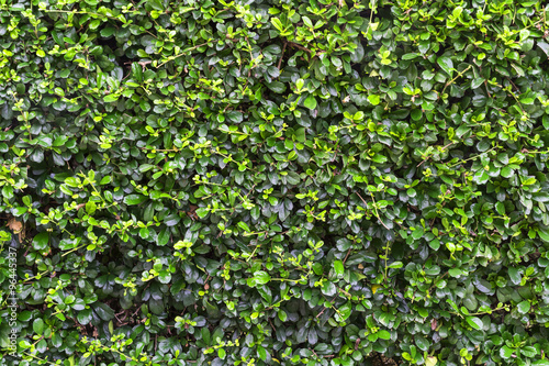 shrubbery in public park Fototapeta