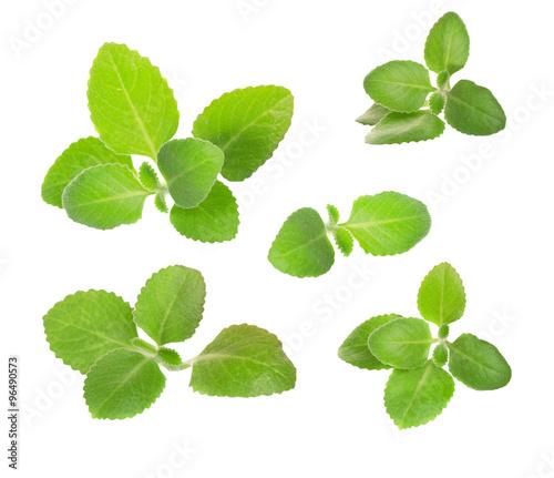 Fototapeta green mint leaves falling in the air isolated on white backgroun obraz na płótnie