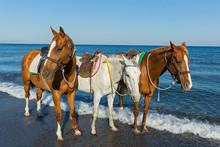 Three Horses On The Beach