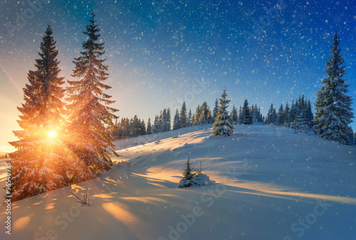 View of snow covered conifer trees and snow flakes at sunrise