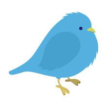 Freezing Blue Bird Illustration