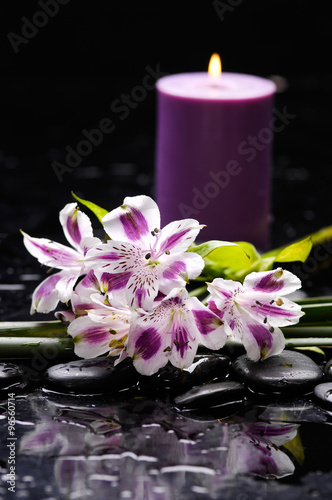 Poster Spa Beautiful branch orchid with candle and therapy stones