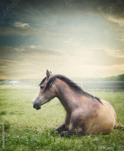 Horse lies and  resting on summer pasture Wallpaper Mural