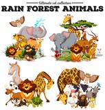 Fototapeta Fototapety na ścianę do pokoju dziecięcego - Different kind of rainforest animals