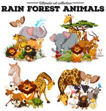 Different Kind Of Rainforest Animals