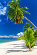 Beautiful palm tree beach on Cook Islands on a sunny day