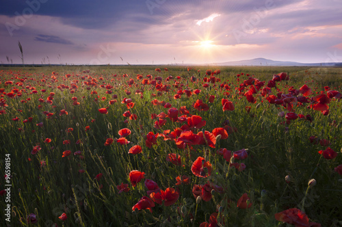 Fototapeta landscape with nice sunset over poppy field obraz na płótnie