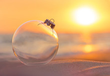Christmas-tree Decoration Glass Ball At Sunset Time Ocean Beach