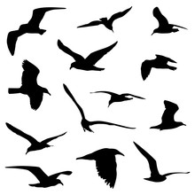 Various Flying Birds In Silhou...