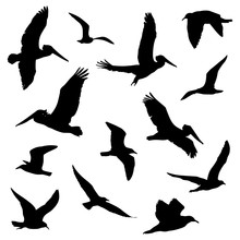 Various Flying Birds In Silhouette Vector