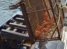 600 Pound Crab Pots Are Raised By A Hydraulic Lift.