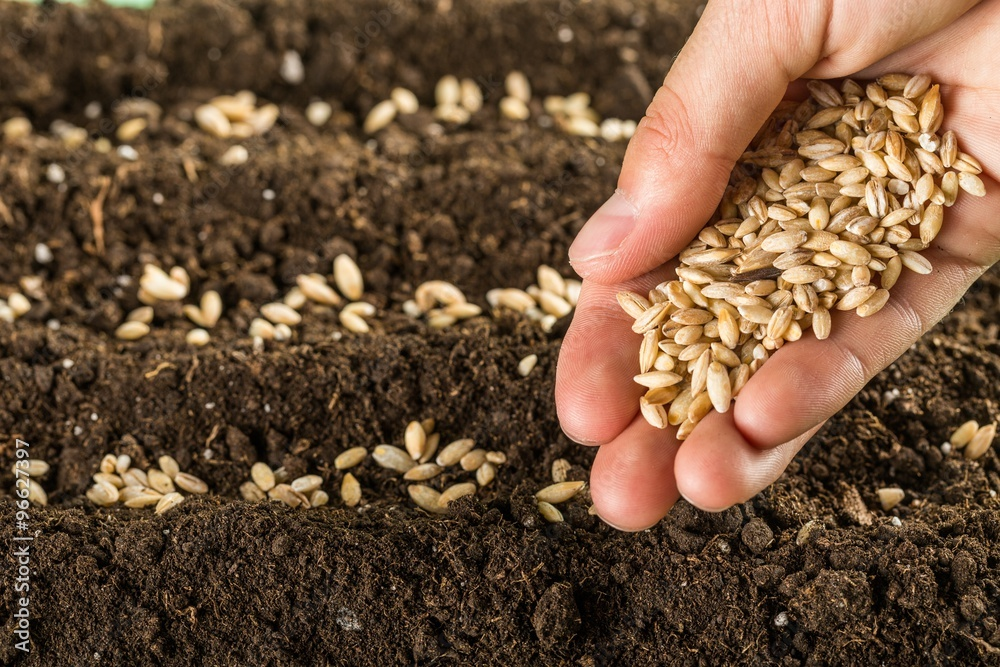 Fototapety, obrazy: Seed.