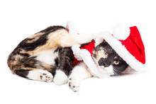 Cute Playful Christmas Kitty