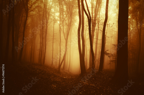 Canvas Prints Honey morning light in forest