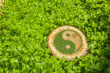 Tree Stump On The Grass With Ying Yang Symbol.