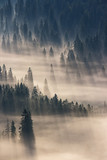 coniferous forest in foggy mountains - 96710778