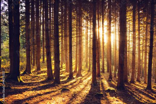 Photo  Herbstlandschaft im Schwarzwald