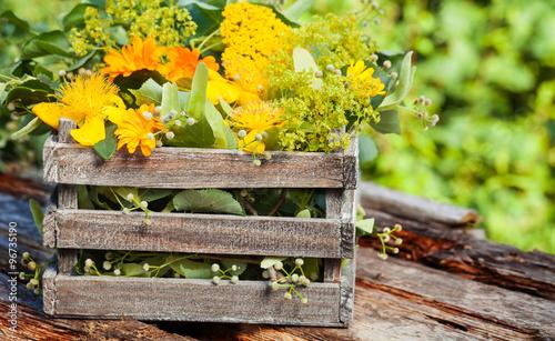 fototapeta na lodówkę Heilkräuter, Heilpflanzen in Holzkiste für Homöopathie