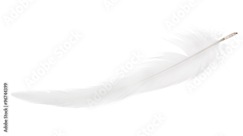light gray thin long isolated feather