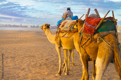 Camel caravan at the beach of Essaouira, Morocco.