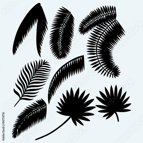 Collection set of palm leaves. Isolated on blue background. Vector silhouettes Wall mural