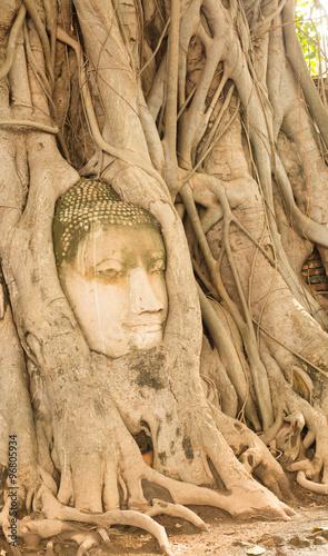 Foto op Plexiglas Artistiek mon. Buddha head overgrown by fig tree in Wat Mahathat. Ayutthaya historical park.