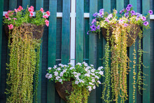 Beautiful Flower Planter Hanging Against A Wooden Wall