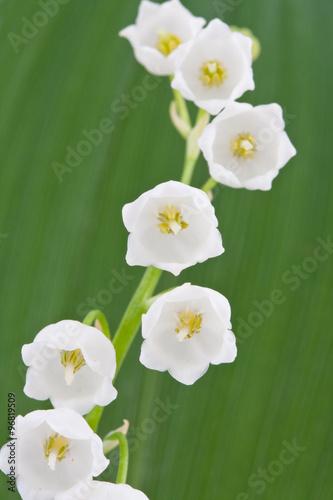 Staande foto Lelietje van dalen Lily of the valley flowers