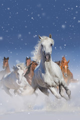Horse herd run fast in winter snow field