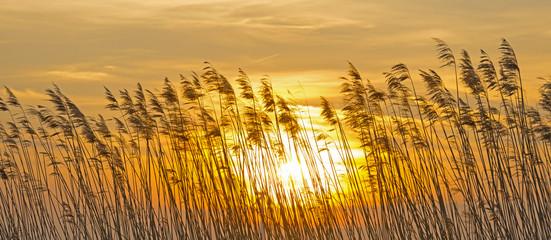 Panel Szklany Podświetlane Wschód / zachód słońca Sunrise over reed in a field in winter