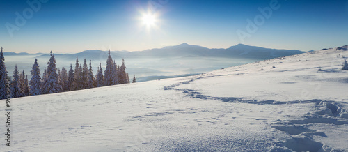 Sunny winter panorama of Carpathian mountains #96829951