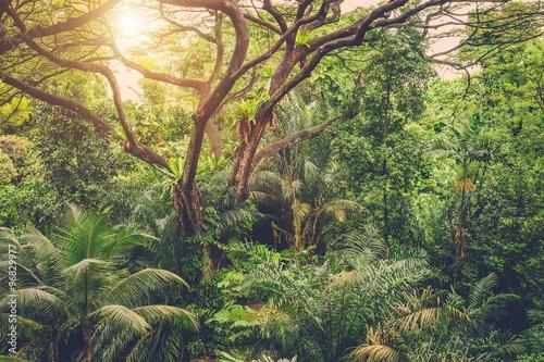 Poster Kaki Sun shining into tropical green jungle